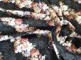 画像6: 中くらいの花柄